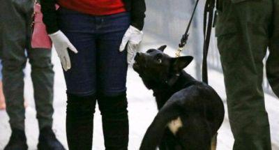 Militer India Latih Anjing Pelacak Deteksi Infeksi Virus Corona